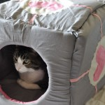 Catpanion cube by Rachael Whitaker image 1