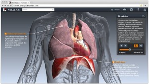 BioDigital Human 3D Virtual Anatomy
