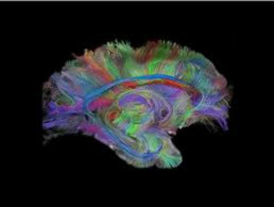 Hard Wired Brain
