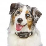 Voyce Smart Collar 02