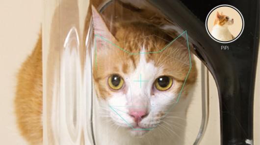 bistro-cat-feeder