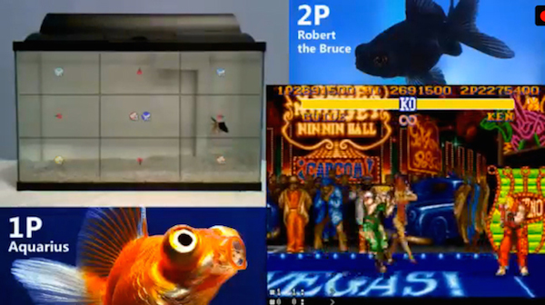 Twitch Fish Play Street Fighter II image