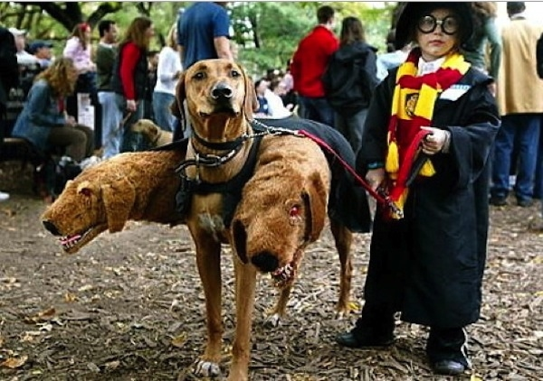 Harry Potter & Fluffy