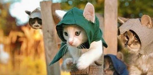 Assassin's Creed kitten cosplay image