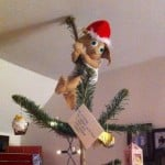 Dobby on top of a tree