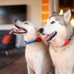 Wuf Smart Dog Collar