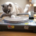 Cat-scratch-turntable-1