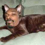 Cat-scratch-turntable-2
