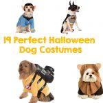 19 Perfect Halloween Dog Costumes