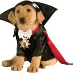 Dog Dracula Costume