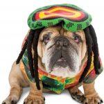 Jamaican Rasta Dog Costume