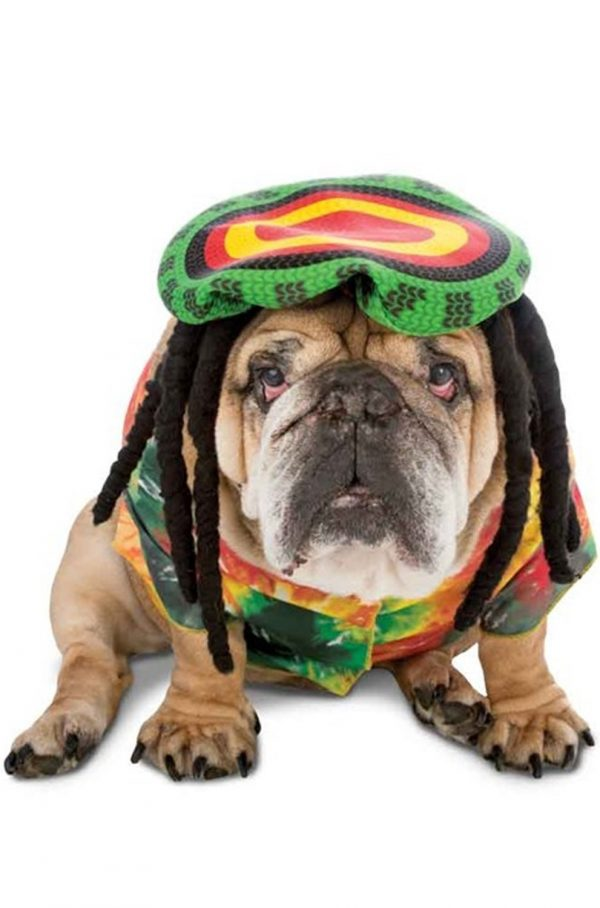 Jamaican Rasta Dog Costume