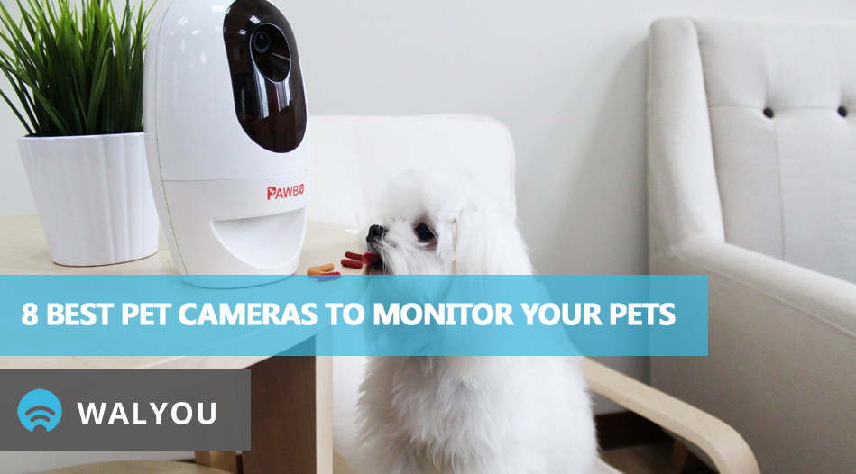 8-best-pet-cameras-to-monitor-your-pets