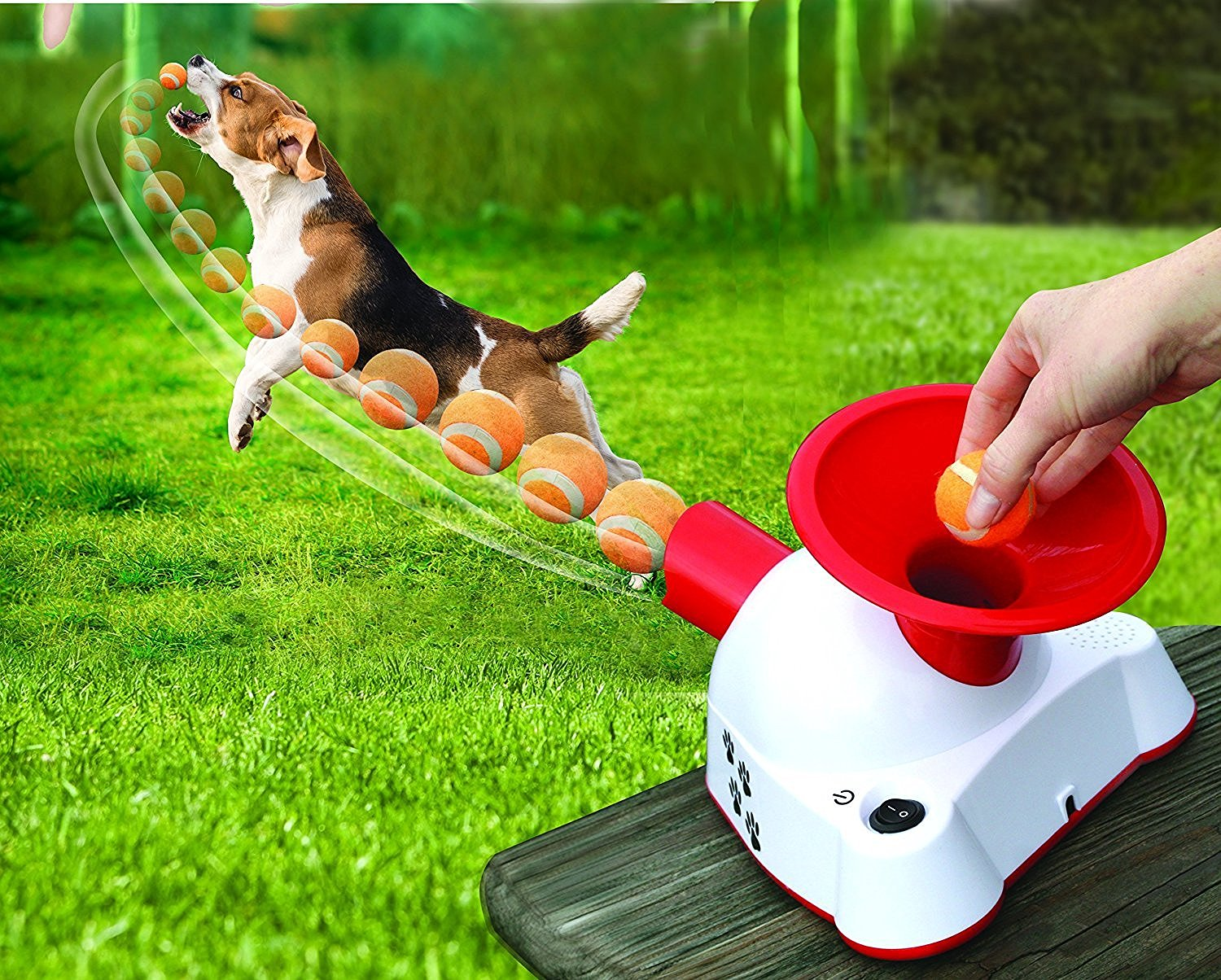 Dog Fetch Toy