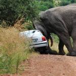 Elephant & Car